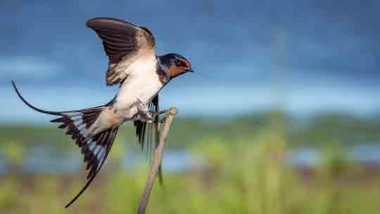Birdwatching-villa-anconetta